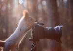 vjeverica-2