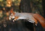 vjeverica-4