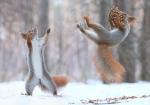 vjeverica-9