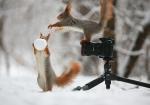 vjeverica-10