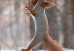vjeverica-8