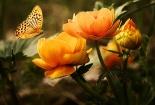 cvijet-001