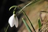 cvijet-0014
