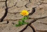 cvijet-0016