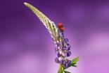 cvijet-0017