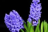cvijet-0019