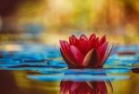 cvijet-002