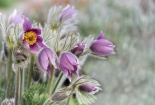 cvijet-0020