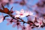 cvijet-0024