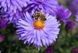 cvijet-0025