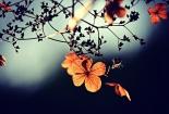 cvijet-003