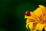 cvijet-005