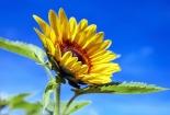 cvijet-008