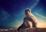 majmuni-0001 (10)