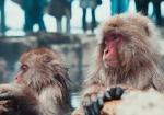 majmuni-0001 (11)
