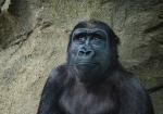 majmuni-0001 (12)