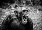 majmuni-0001 (13)