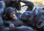 majmuni-0001 (15)