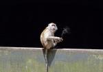 majmuni-0001 (16)