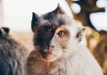 majmuni-0001 (18)