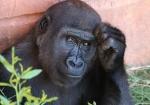 majmuni-0001 (19)