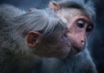 majmuni-0001 (20)