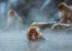 majmuni-0001 (21)