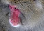 majmuni-0001 (3)