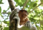 majmuni-0001 (4)