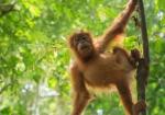 majmuni-0001 (7)