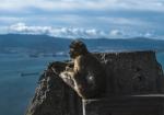 majmuni-0001 (8)