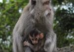 majmuni-0001 (9)