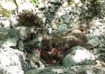 mudna-dol-fratar-hahlic-0001-16