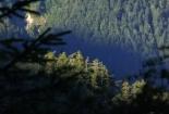 svježina planinskih šuma