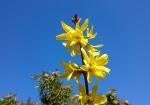 cvijeće 09