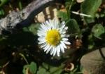 cvijeće 18