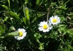 cvijeće 22