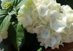 cvijeće 28