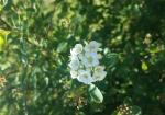 cvijeće 32
