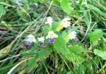 cvijeće 48