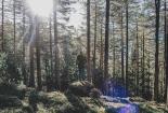 Šuma3