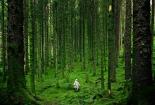 Šuma4