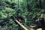 Šuma5