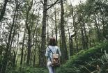 Šuma6