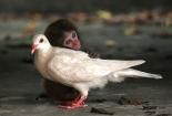 neobicna-zivotinjska-prijateljstva-20