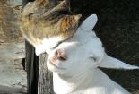 neobicna-zivotinjska-prijateljstva-24