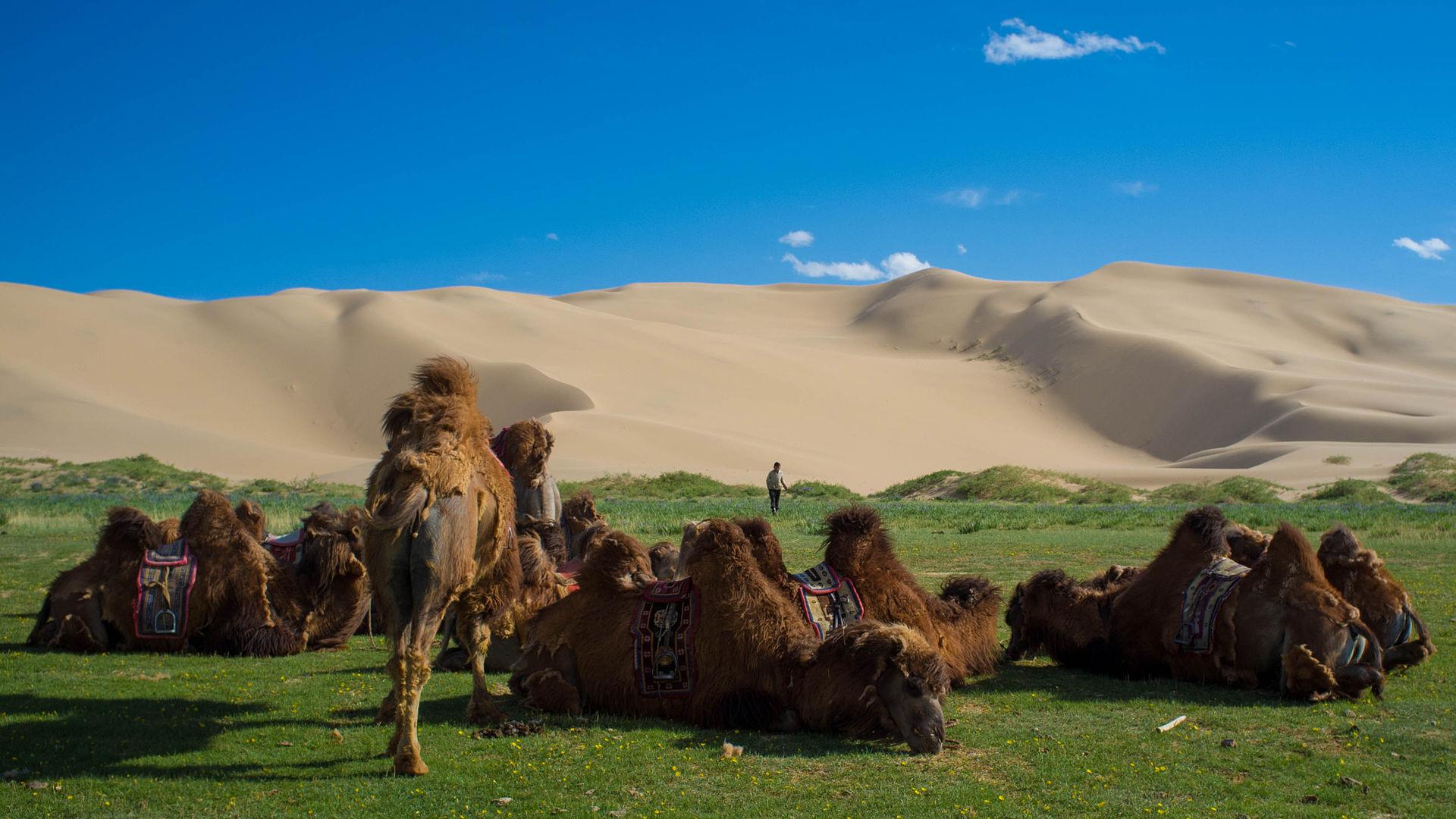 Pustinja Gobi