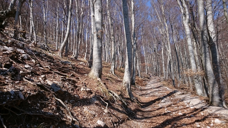 Velesov kraj