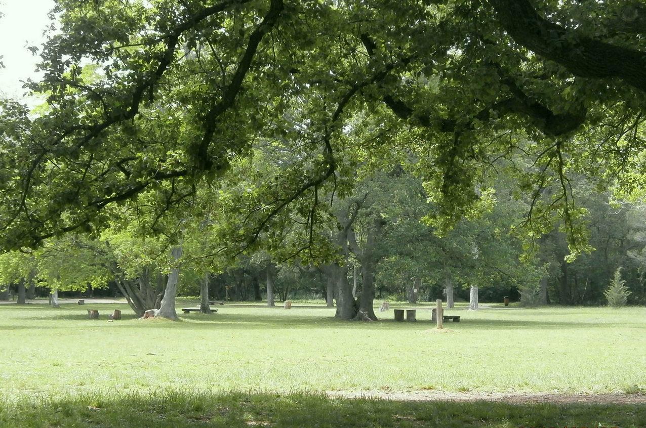 Šijanska šuma