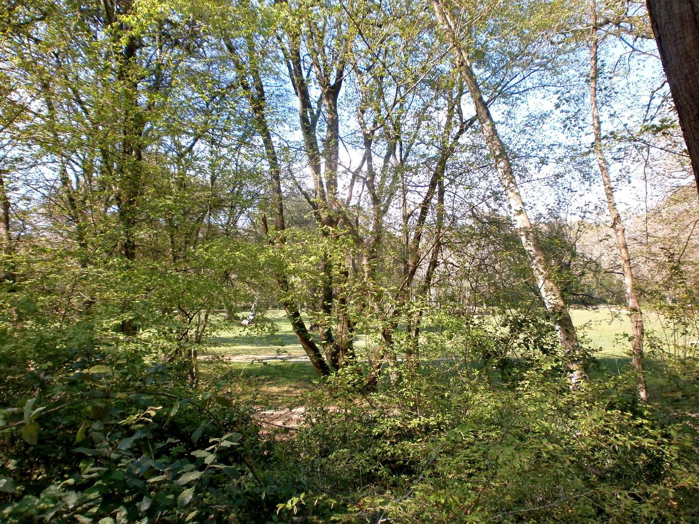 Šijanksa šuma
